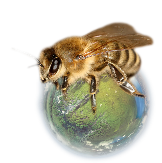 Planet in čebela
